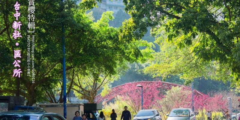【台中】。櫻花超夯景點小旅行|新社區公所櫻花盛開
