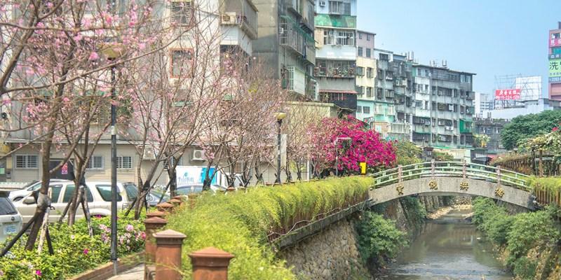 【台北】。坐台北捷運就能到達的賞櫻景點!市區裡的六十棵粉色吉野櫻在『土城。希望之河』