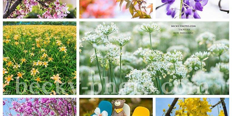 【台灣】。一年四季台灣開花情報  花開季節  跟著[自己的小小世界]Becky一起旅遊攝影吧!