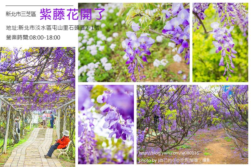 【台北】。走在這夢幻的紫色隧道,像葡萄串的紫藤花開好了!!!! 「紫藤花咖啡園」