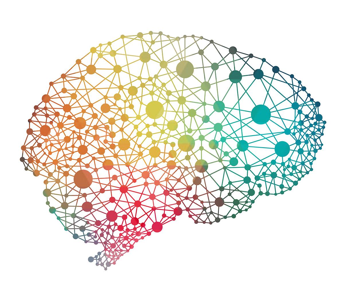 Las Sociedades Complejas Necesitan Grandes Cerebros