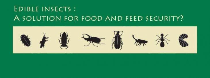 insectos fao
