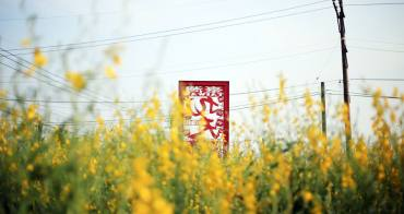 台中沙鹿│太陽麻花海-九天民俗技藝團旁.大片金黃色的大金不換.有著和油菜花一樣的好拍亮黃色花朵
