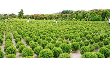 彰化田尾│台版波波草-不用飛日韓,田尾公路花園就有可愛療癒好拍的圓滾滾綠球