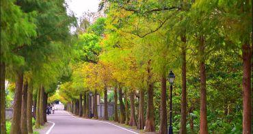 桃園大溪石園路落羽松大道 | 美到直接改路名成落羽松路的桃園IG必拍景點,落羽松林延綿達一公里