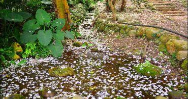 桃園桐花步道   大溪十一指桐花古道,百年茄冬樹與溪流相伴桐花步道