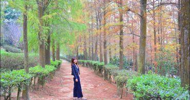 台中后里落羽松》如光山寺,漫步落羽松浪漫步道,台中泰安落羽松森林秘境