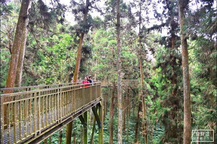 南投景點》溪頭森林遊樂區(溪頭自然教育園區)空中步道,與清境天空步道齊名的森林sky walk