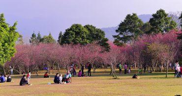 《 南投櫻花野餐 》2019暨南大學櫻花季,席座賞櫻就像到日本一樣的賞櫻感受