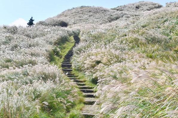 台北陽明山步道 七星山主東峰步道,賞秋芒眺望北國風光,輕鬆爬的網美打卡熱點