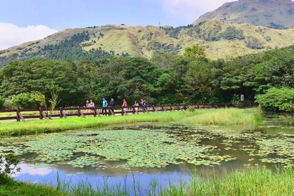 台北陽明山|冷水坑步道,30分鐘帶你走訪四大景點牛奶湖、菁山吊橋、冷水坑生態池、冷擎步道落羽松