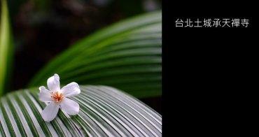 [ 台北 ] 土城承天禪寺-天上山桐花步道