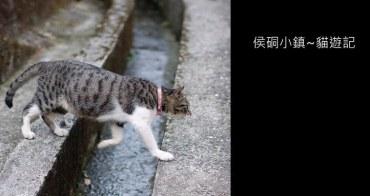[ 台北好玩 ] 瑞芳侯硐~貓村貓遊記