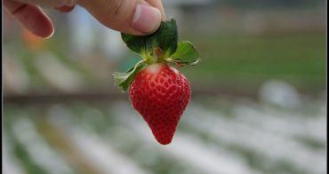 [ 苗栗 ] 大湖草莓季&大湖酒莊~ 假日出遊好去處
