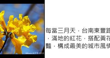 [ 遊記 ] 台南東豐路-木棉花道