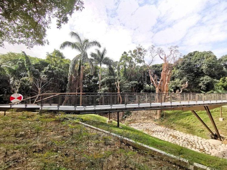 哈赫拿爾森林。森林河谷綠意,漫步在橋上|台南體育園區