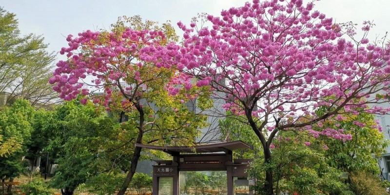 粉紅棉花糖雲朵爆開,美得好療癒 台南夢幻景點