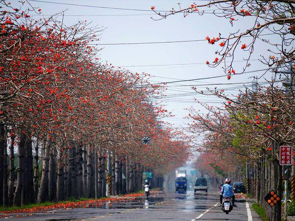 【台南百寶鄉-將軍】全台最長木棉花道一路燃燒向春天吶喊