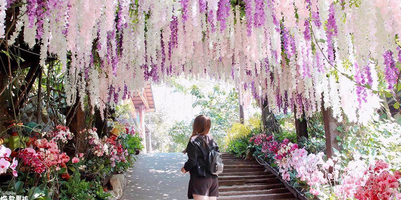 台南大坑休閒農場,IG打卡景點!超浪漫的紫藤隧道,宛如置身夢幻仙境~
