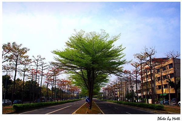 台南東區「日光緩緩 Cest la Vie」-在最美的東豐路上享受異國美食