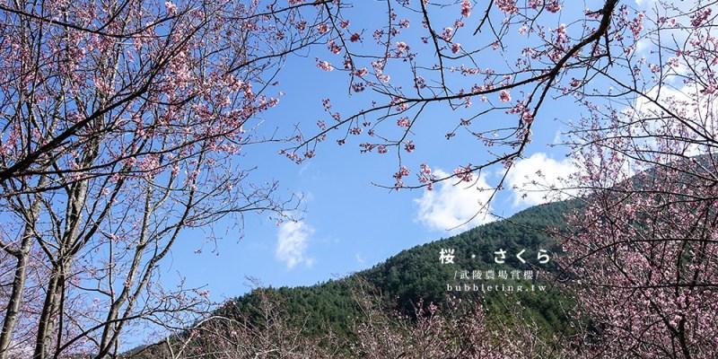 [旅遊] 武陵農場,櫻花盛開的山中美景 (更新2020資訊、賞櫻一日遊)