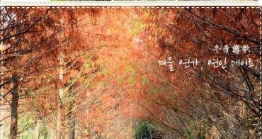 『冬季戀歌』霧峰落羽松,來自北國的浪漫約會之地~