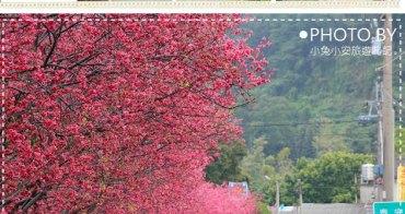 『后里賞櫻』泰安派出所櫻花盛開,全台最美的警察局。(2/16花況)