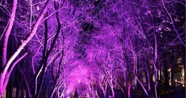 『2012九族櫻花』九族文化村追櫻趣~2012九族夜櫻篇