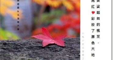 『札幌旅行』探北海道舊道廳紅磚樓,遇見了北大片片楓紅。