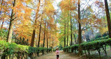 落羽松秘境 | 如光山寺池杉林浪漫橘紅小徑,我們一起在森林散步吧!