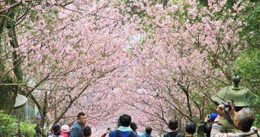 內湖櫻花季 | 碧山巖元覺寺粉紅風暴,和風味粉嫩櫻花浪漫綻放中!