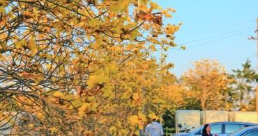 新竹風鈴木 | 巨埔休閒農場超好拍彩虹水管屋,夢幻風鈴木同步綻放中!