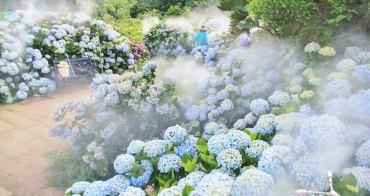 竹子湖繡球花季   花與樹夢幻系繡球花田,迷霧仙境繡球花小徑好迷人~