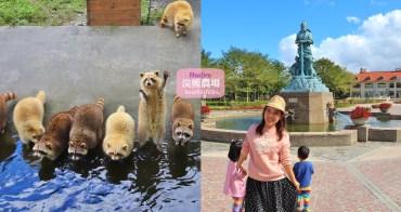 花蓮景點》來和可愛浣熊互動,走跳廣闊兆豐農場!以及美麗湖畔落羽松林~