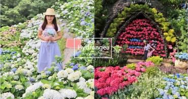 繡球花景點》部落客帶你全台追繡球花!12個熱門賞花秘境公開,追逐繽紛花海從現在!