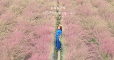 南投》免飛韓國了!集集浪漫粉黛亂子草,和平快樂田園粉紅棉花糖場景好夢幻!