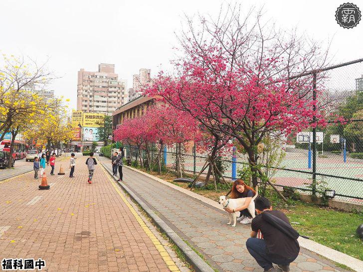 20180307231000 36 - 一次能捕捉到盛開的櫻花與黃花風鈴木耶~市區內賞花小確幸~