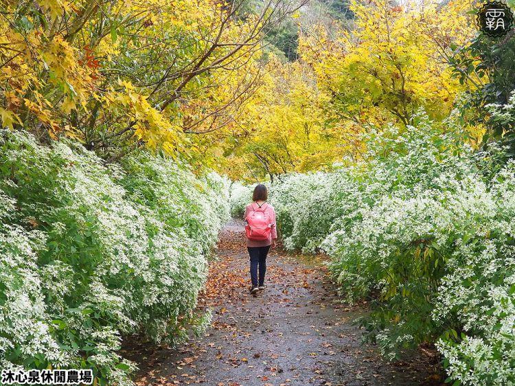 <台中新社> 新社山城慢活、慢食、慢遊之旅,葡萄樹下饗宴,採香菇,體驗在地農村生活~