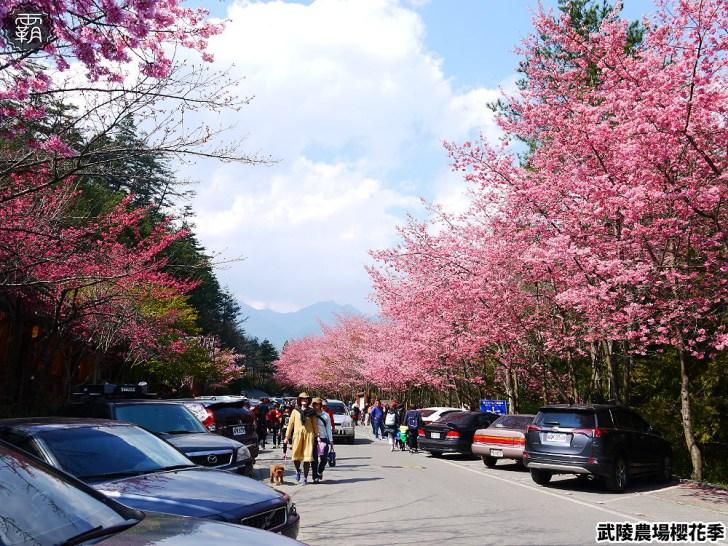 20190117222453 94 - 2019武陵農場櫻花季,賞櫻專車懶人包,含管制日期、各路線車票資訊。