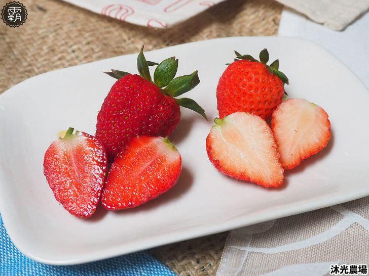 20190405215345 48 - 白草莓、水蜜桃草莓好特別!沐光農場,溫室高架草莓園,採草莓超舒適!