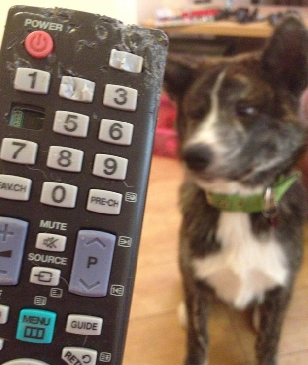 This dog, who also seems to have something against TVs.
