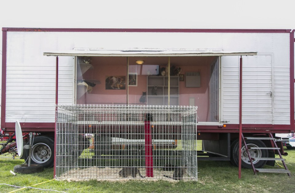 The cats, who live in their own heated trailer, are all neutered and are a mix of male and female.
