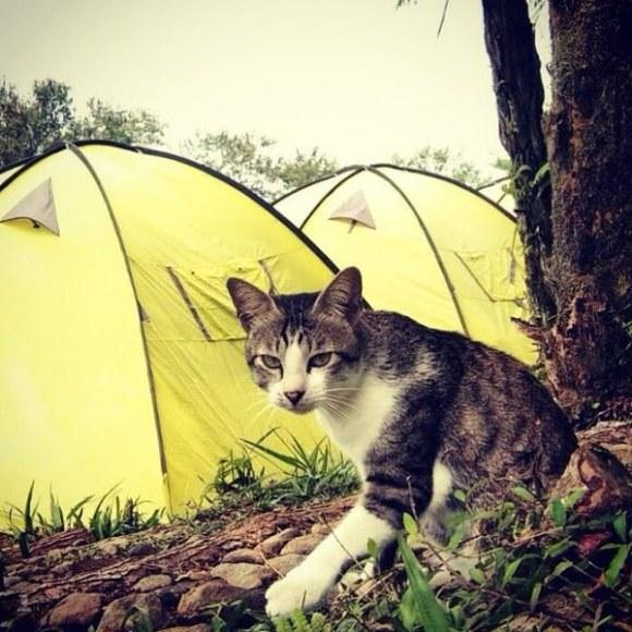 Felines on campsites in the UK: