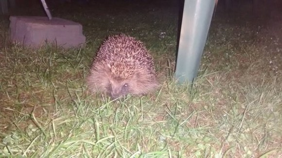 Annoying campsite pests in the UK: