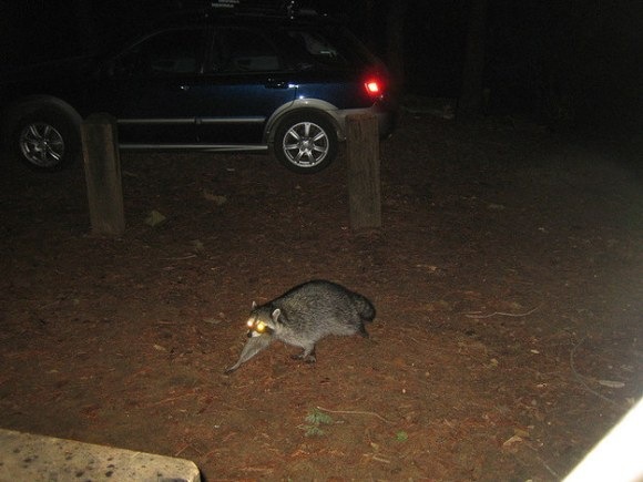 Annoying campsite pests in America: