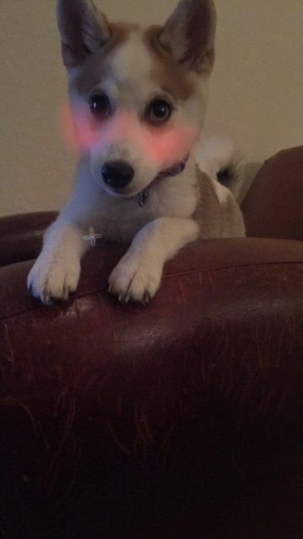 This little cutie: