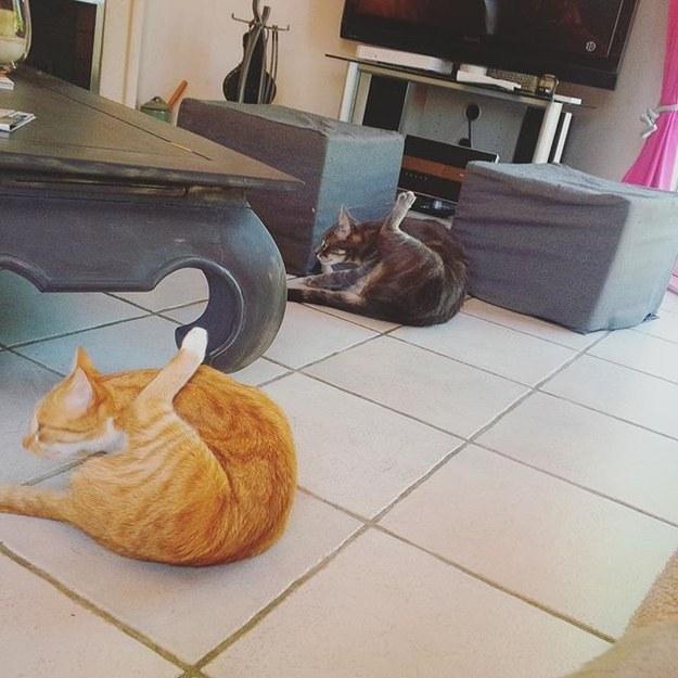 Sitting in on feline yoga classes: