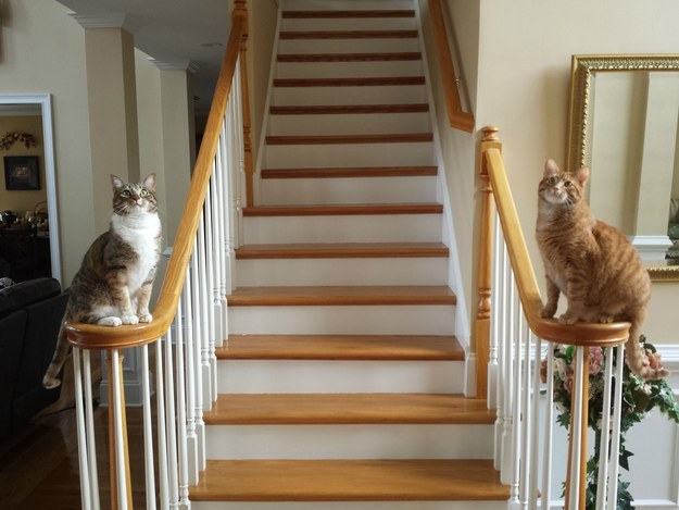 Coming home every single day to two fluffy house greeters:
