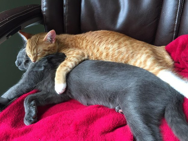 Witnessing the cutest spooning sessions:
