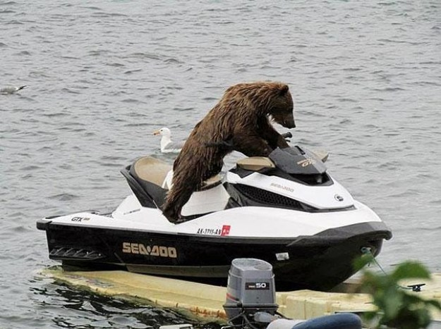 And this rad bear who is about to get all the ladies: